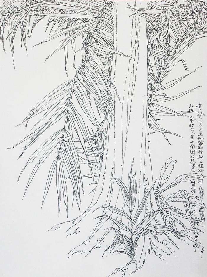 李汉平 《线描写生花卉1》